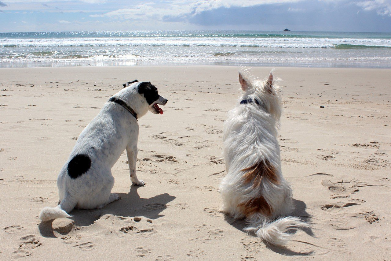 Dogs Relaxing on the Beach