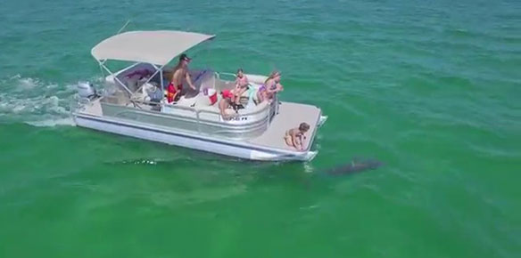 Why You Should Choose Pontoon Boat Als In Panama City Beach