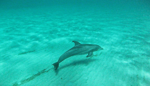 photo_dolphin-01.jpg