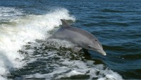 Visiting Dolphins in Panama City Beach