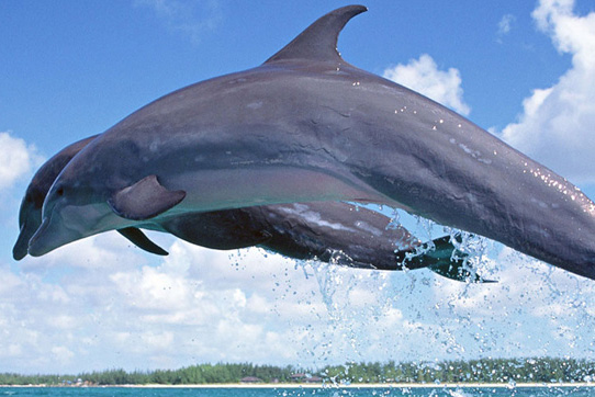 photo_dolphin_tour_1.jpg