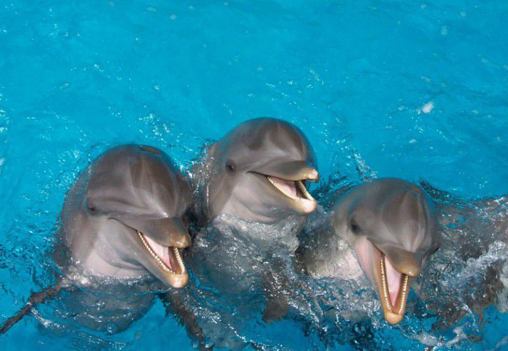photo_dolphin_tour_3.jpg