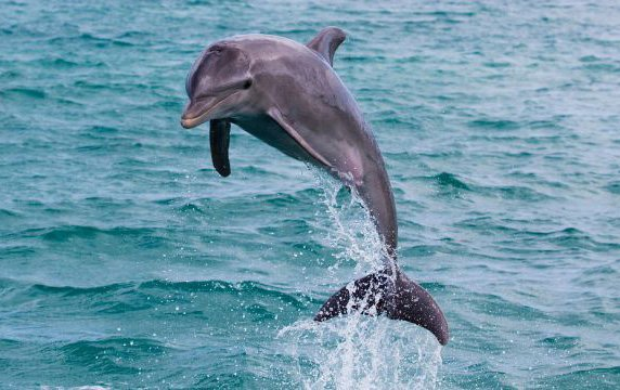 photo_dolphin_tour_4.jpg