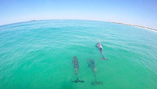 photo_dolphins-02.jpg
