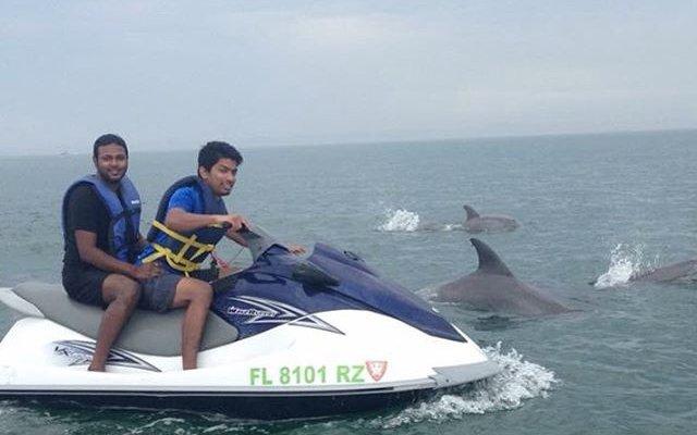 Bottlenose dolphin dorsal fin