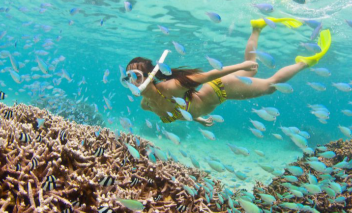 Snorkeling Trips In Panama City Beach Adventures At Sea
