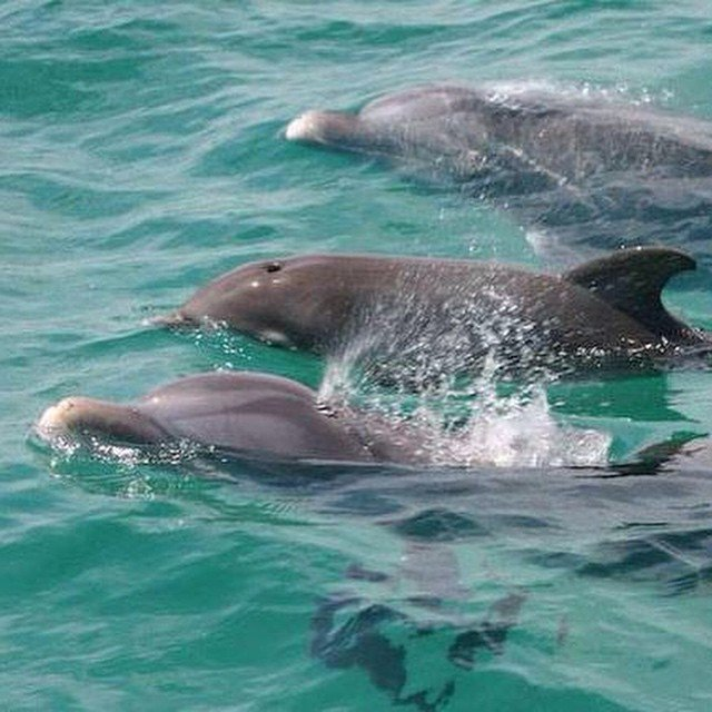 See the dolphins at Panama City Beach