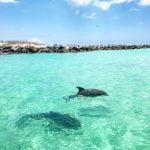 Dolphin Tours Swim with dolphins panama city beach