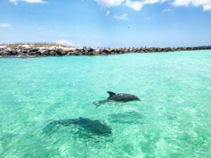 Swim with dolphins panama city beach Dolphin Snorkel Tours